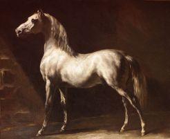 Cheval arabe gris-blanc.