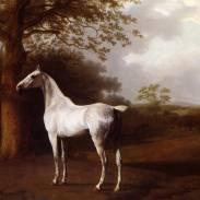 Cheval blanc dans un pré.