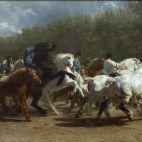 Foire aux chevaux.
