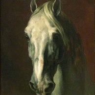 Tête de cheval blanc.