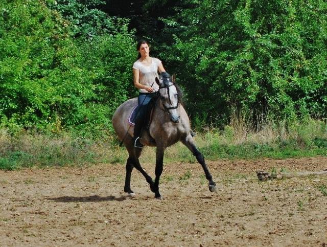 Travail du jeune cheval pour lui donner des bases solides | IsaDanne