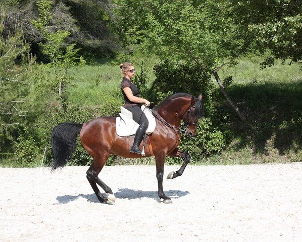 Pieds nus et performance sportive : tous les chevaux d'Isa Danne évoluent pieds nus.