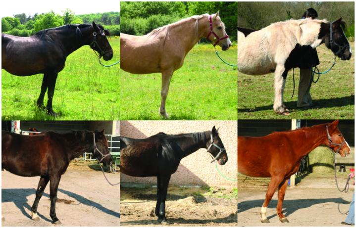 Groupe 1 (trois premiers chevaux) et Groupe 2 (trois derniers).