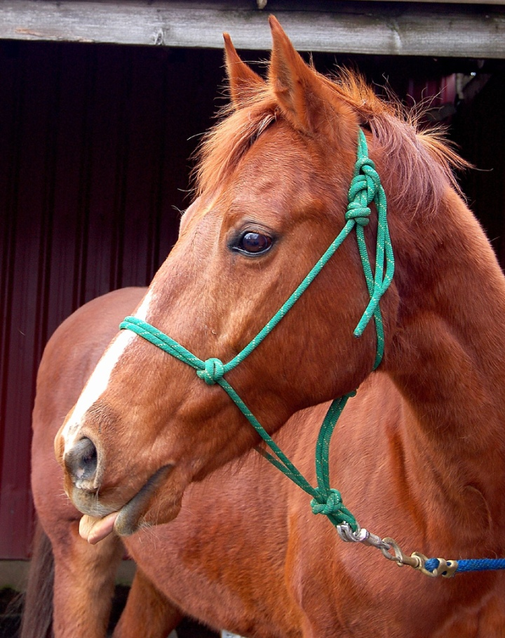 Les diverses préférences du cheval (musique, goût, matériel…)
