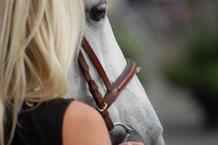Les études sur la relationhumain-cheval