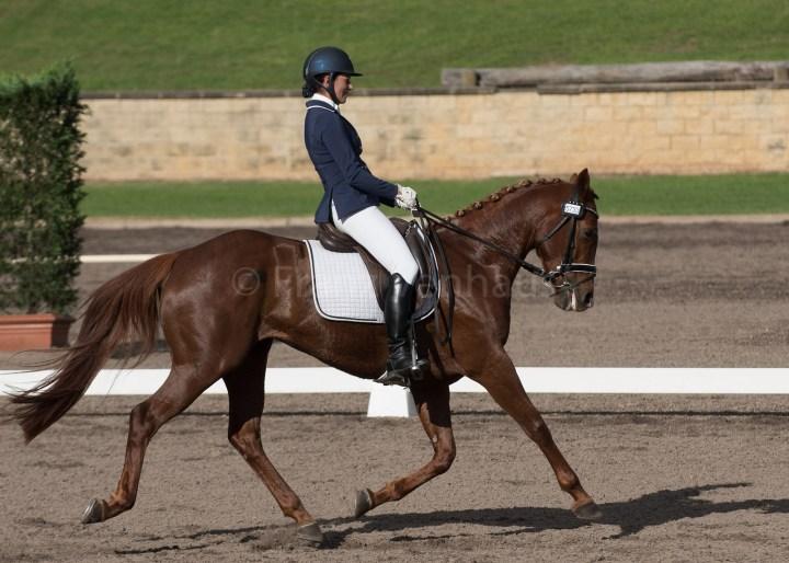 La tension des rênes et emploi des mains dans l'équitation d'appui