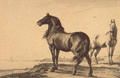 Deux chevaux.