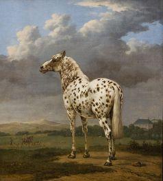 Le cheval pie.