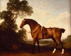 Un cheval de chasse bai.