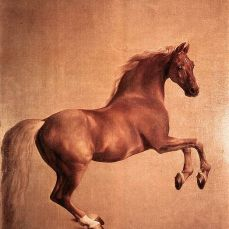 Whistlejacket.