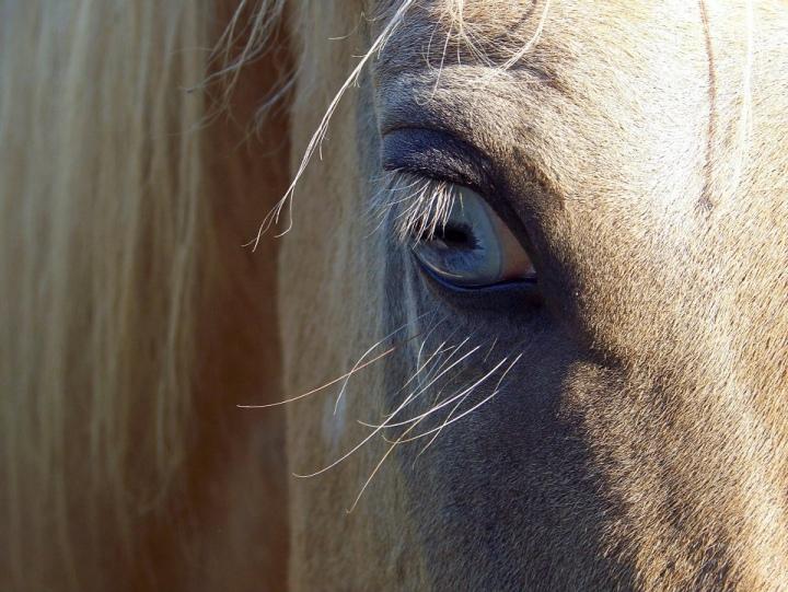 Les protections oculaires pour lecheval