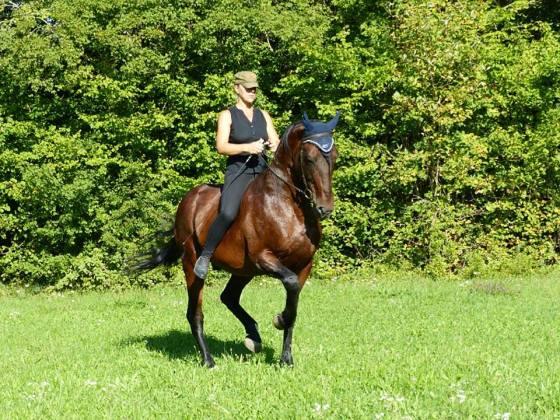 Piaffer recherche du bon équilibre pour avoir un cheval autonome c'est-à-dire qui fonctionne seul ou quasi seul peut ou pas de jambes et rênes fluides.