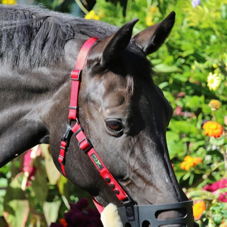 AS - Das Pferd in Blick