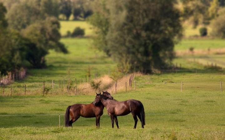 Introduire un nouveau cheval dans ungroupe