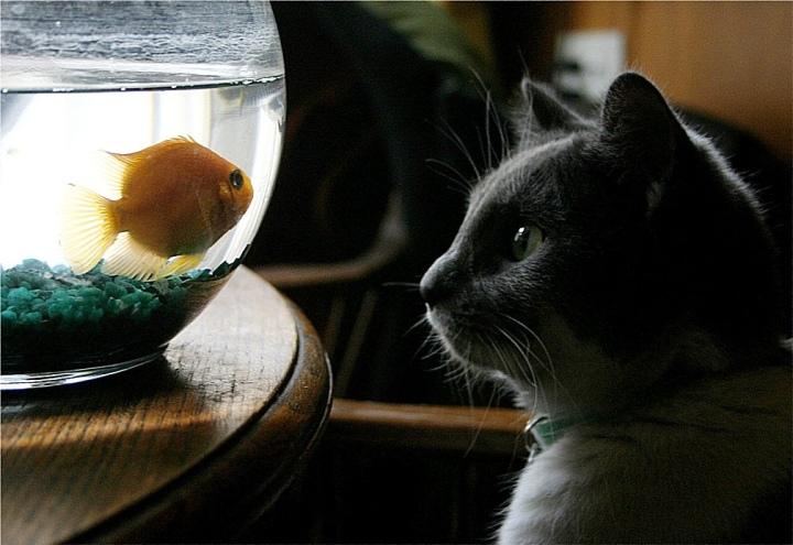 Les aliments pour chat jouent un rôle actif dans lasurpêche
